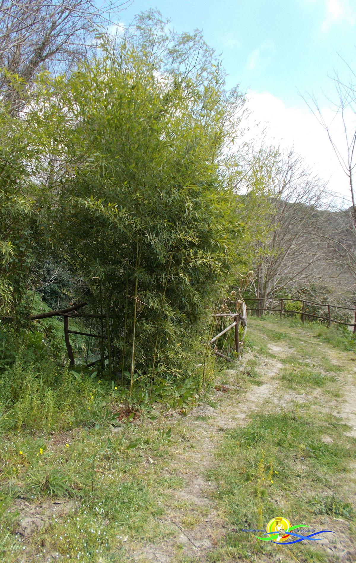 San Floro-ed-il-baco-da-seta